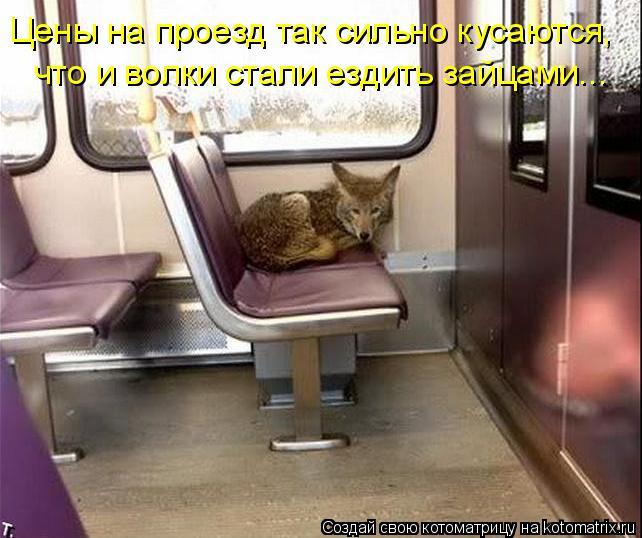 Котоматрица: Цены на проезд так сильно кусаются, что и волки стали ездить зайцами...