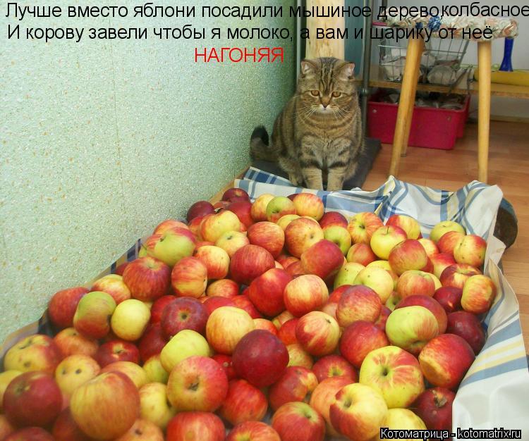 Котоматрица: Лучше вместо яблони посадили мышиное дерево, колбасное И корову завели чтобы я молоко, а вам и шарику от неё НАГОНЯЯ