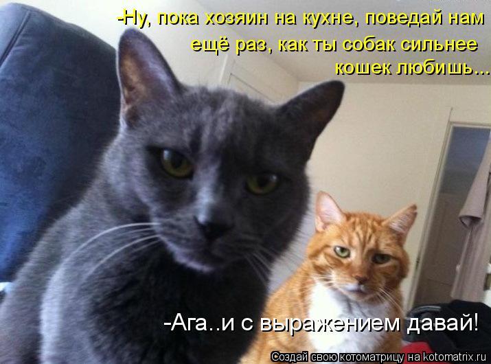 Котоматрица: -Ну, пока хозяин на кухне, поведай нам кошек любишь... ещё раз, как ты собак сильнее -Ага..и с выражением давай!
