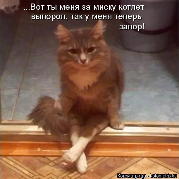 Котоматрица: ...Вот ты меня за миску котлет выпорол, так у меня теперь запор!