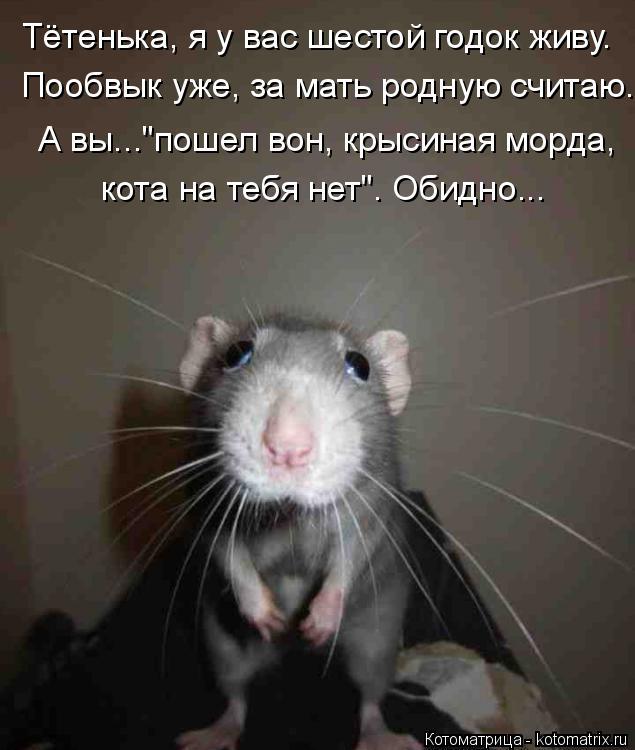 """Котоматрица: Тётенька, я у вас шестой годок живу. Пообвык уже, за мать родную считаю. А вы...""""пошел вон, крысиная морда, кота на тебя нет"""". Обидно..."""