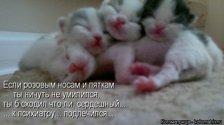 Котоматрица: Если розовым носам и пяткам  ты ничуть не умилился, ты б сходил что ли, сердешный... ... к психиатру... подлечился...