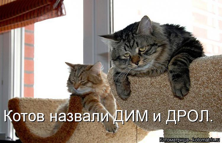 Котоматрица: Котов назвали ДИМ и ДРОЛ.