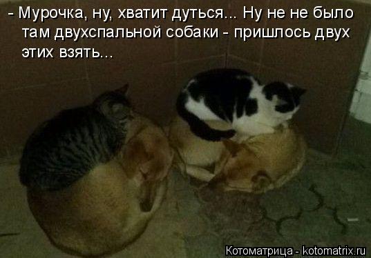 Котоматрица: - Мурочка, ну, хватит дуться... Ну не не было там двухспальной собаки - пришлось двух этих взять...