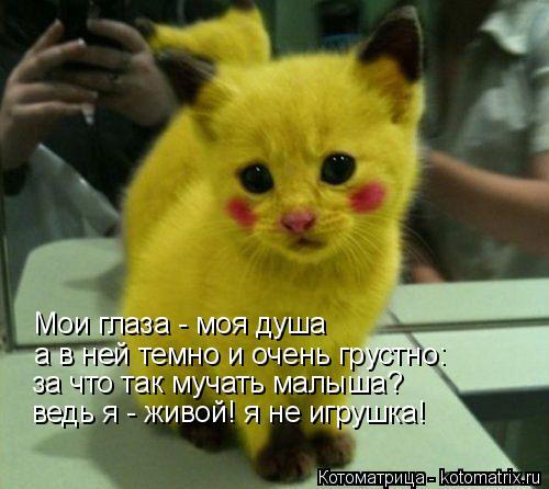 Котоматрица: Мои глаза - моя душа а в ней темно и очень грустно: за что так мучать малыша? ведь я - живой! я не игрушка!