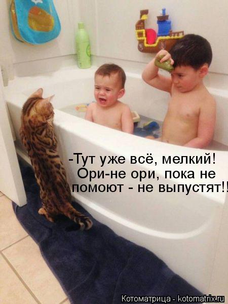 Котоматрица: помоют - не выпустят!! Ори-не ори, пока не -Тут уже всё, мелкий!