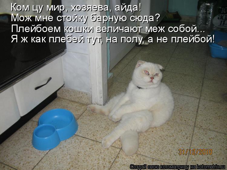 Котоматрица: Ком цу мир, хозяева, айда! Мож мне стойку барную сюда? Плейбоем кошки величают меж собой... Я ж как плебей тут, на полу, а не плейбой!