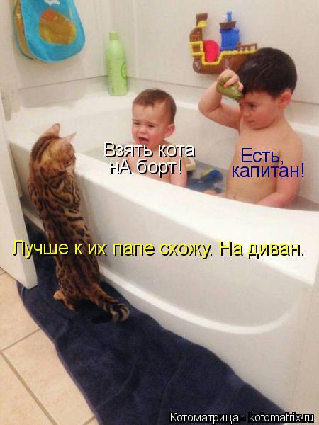 Котоматрица: Взять кота нА борт! Есть, капитан! Лучше к их папе схожу. На диван.