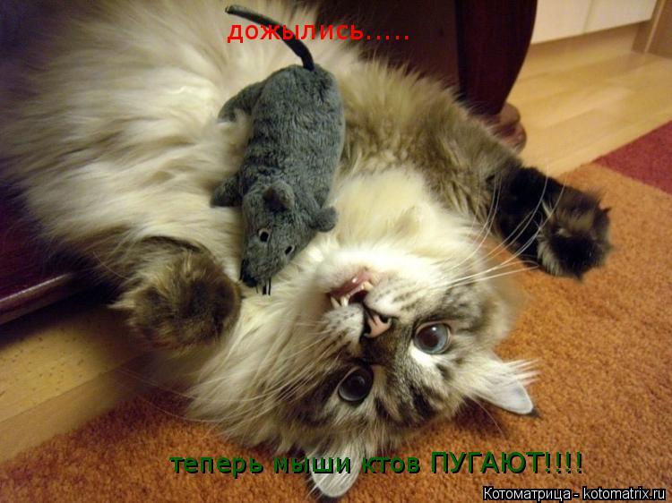 Котоматрица: дожылись..... теперь мыши ктов ПУГАЮТ!!!!