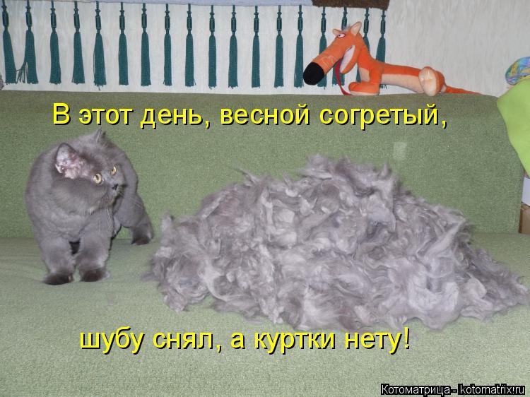 Котоматрица: В этот день, весной согретый, шубу снял, а куртки нету!