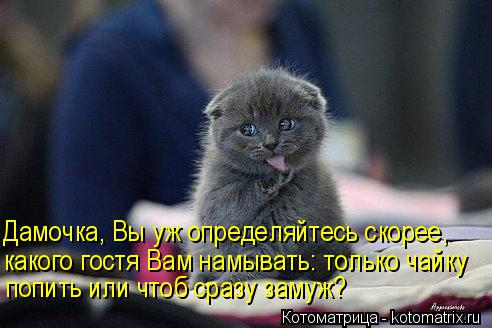 http://kotomatrix.ru/images/lolz/2014/03/08/kotomatritsa_Sf.jpg