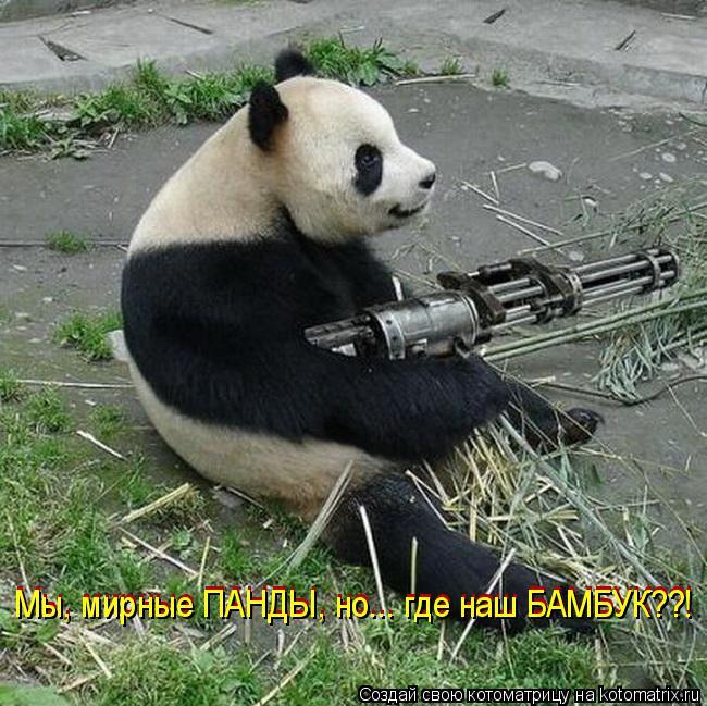 Котоматрица: Мы, мирные ПАНДЫ, но... где наш БАМБУК??! Мы, мирные ПАНДЫ, но... где наш БАМБУК??!