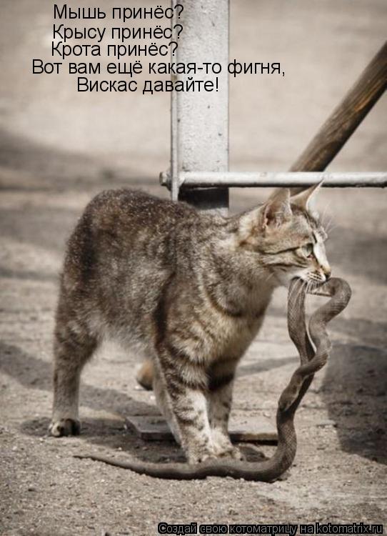 Котоматрица: Мышь принёс? Крысу принёс? Крота принёс? Вот вам ещё какая-то фигня, Вискас давайте!