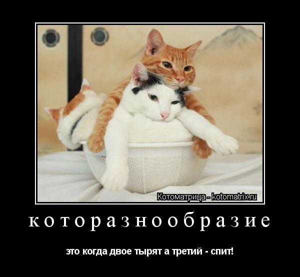 Котоматрица: которазнообразие это когда двое тырят а третий - спит!