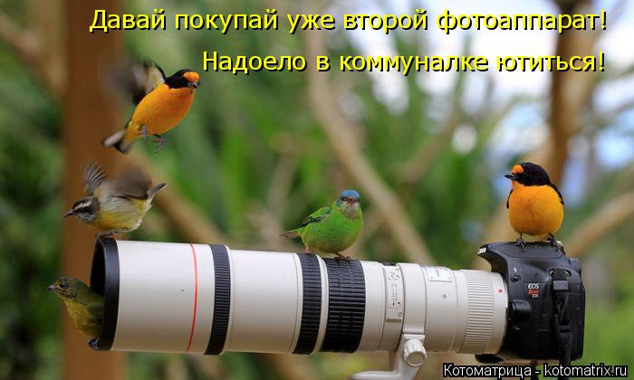 Котоматрица: Давай покупай уже второй фотоаппарат! Надоело в коммуналке ютиться!
