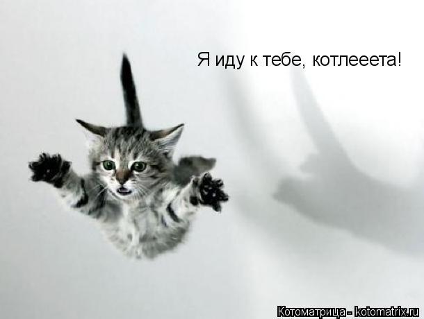 Котоматрица: Я иду к тебе, котлееета!