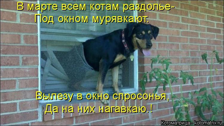 Котоматрица: В марте всем котам раздолье- Под окном мурявкают. Вылезу в окно спросонья, Да на них нагавкаю.!