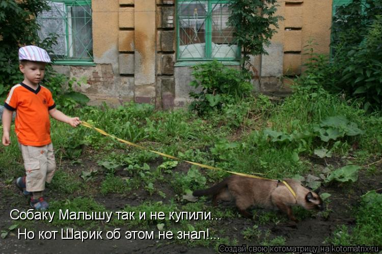 Котоматрица: Собаку Малышу так и не купили... Но кот Шарик об этом не знал!...