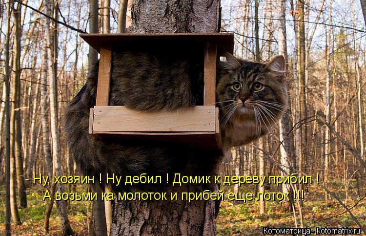 Котоматрица: - Ну, хозяин ! Ну дебил ! Домик к дереву прибил ! А возьми ка молоток и прибей еще лоток !!!