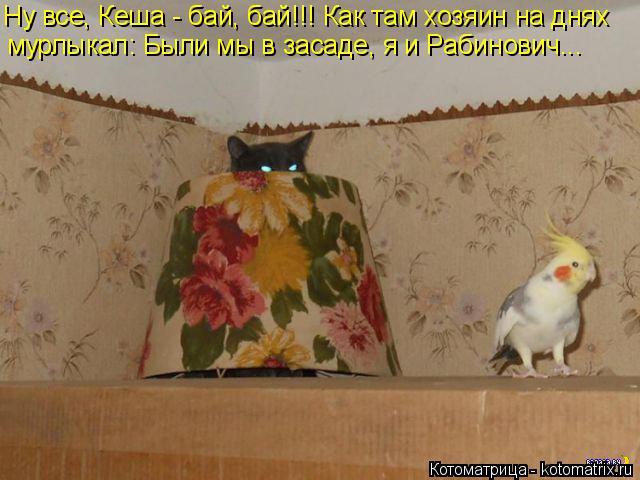 Котоматрица: мурлыкал: Были мы в засаде, я и Рабинович... Ну все, Кеша - бай, бай!!! Как там хозяин на днях