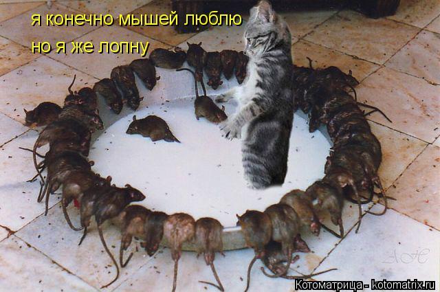 Котоматрица: я конечно мышей люблю  но я же лопну