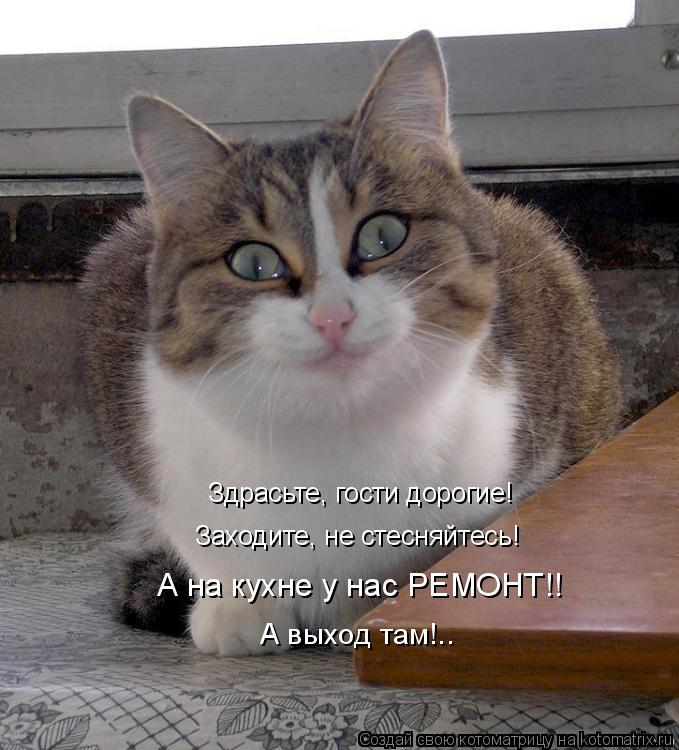 Котоматрица: Здрасьте, гости дорогие! Заходите, не стесняйтесь! А на кухне у нас РЕМОНТ!! А выход там!..