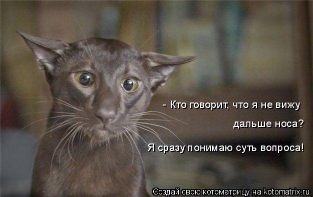 Котоматрица: - Кто говорит, что я не вижу  дальше носа? Я сразу понимаю суть вопроса!