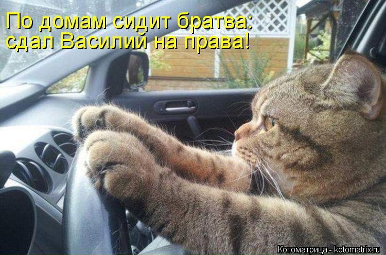 Котоматрица: сдал Василий на права! По домам сидит братва: