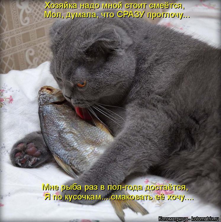 Котоматрица: Хозяйка надо мной стоит смеётся, Мол, думала, что СРАЗУ проглочу... Мне рыба раз в пол-года достаётся, Я по кусочкам....смаковать её хочу....