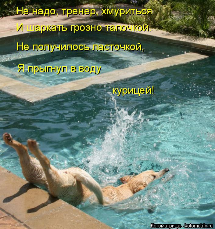 Котоматрица: Не надо, тренер, хмуриться И шаркать грозно тапочкой. Не получилось ласточкой, Я прыгнул в воду курицей!