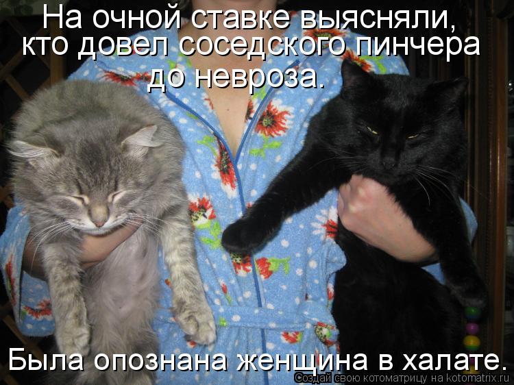 http://kotomatrix.ru/images/lolz/2014/03/12/kotomatritsa_FI.jpg
