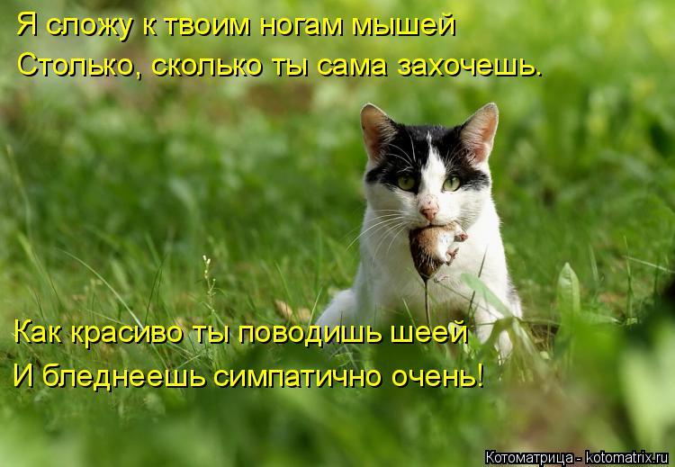 Котоматрица: Я сложу к твоим ногам мышей Столько, сколько ты сама захочешь. Как красиво ты поводишь шеей И бледнеешь симпатично очень!
