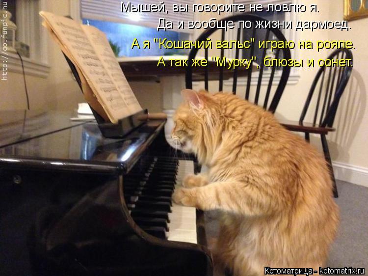 """Котоматрица: Мышей, вы говорите не ловлю я. Да и вообще по жизни дармоед. А я """"Кошачий вальс"""" играю на рояле. А так же """"Мурку"""", блюзы и сонет."""