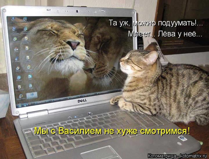 Котоматрица: Та уж, можно подуумать!... Млеет... Лёва у неё... Мы с Василием не хуже смотримся!