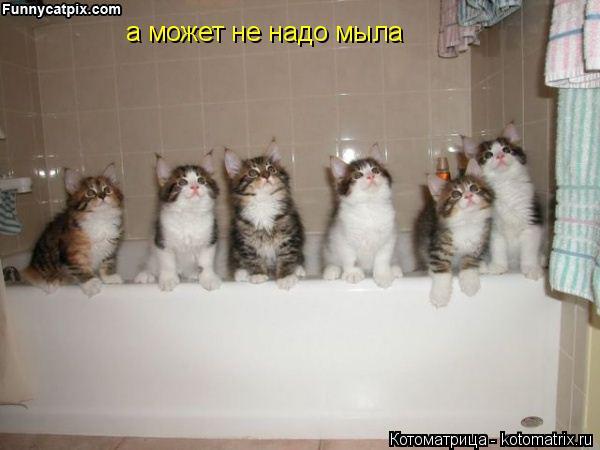Котоматрица: а может не надо мыла