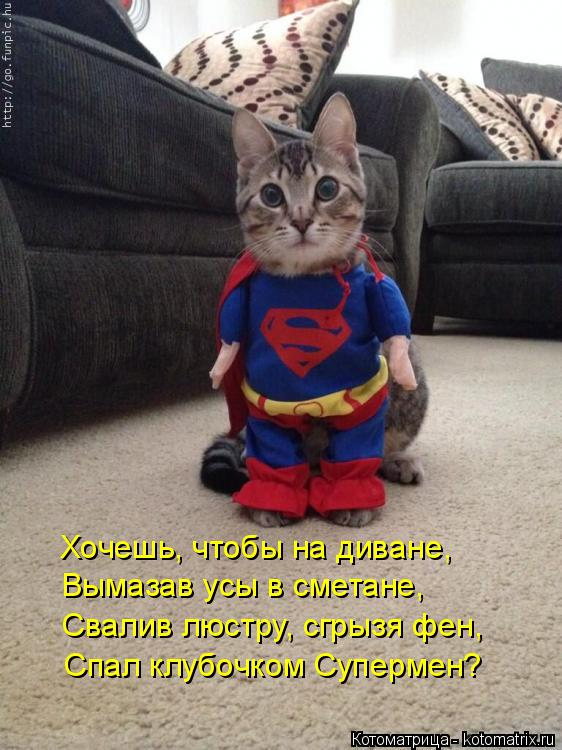 Котоматрица: Хочешь, чтобы на диване, Вымазав усы в сметане, Свалив люстру, сгрызя фен, Спал клубочком Супермен?