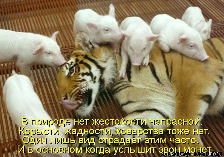 Котоматрица: В природе нет жестокости напрасной. Один лишь вид страдает этим часто. Корысти, жадности, коварства тоже нет. И в основном когда услышит зво