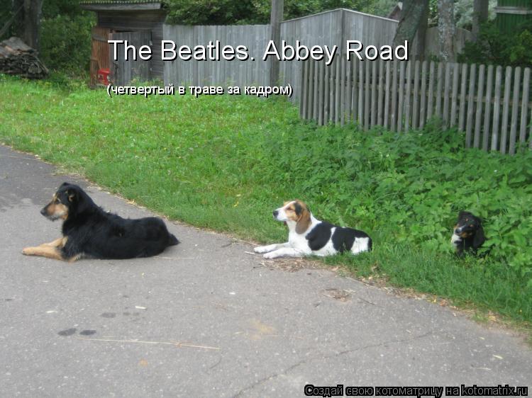 Котоматрица: The Beatles. Abbey Road (четвертый в траве за кадром)