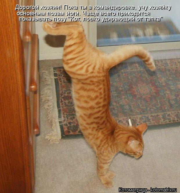 """Котоматрица: Дорогой хозяин! Пока ты в командировке, учу хозяйку основным позам йоги. Чаще всего приходится показывать позу """"Кот, ловко удирающий от тапк"""