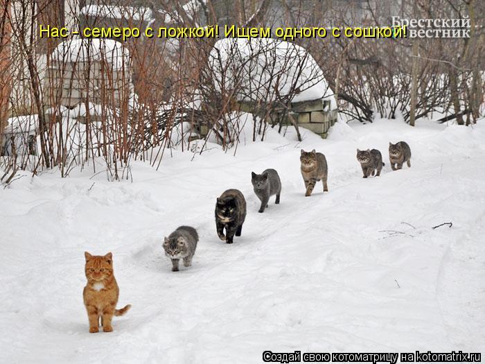 Котоматрица: Нас - семеро с ложкой! Ищем одного с сошкой!
