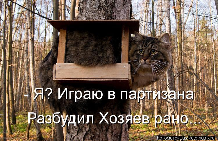 Котоматрица: - Я? Играю в партизана Разбудил Хозяев рано...