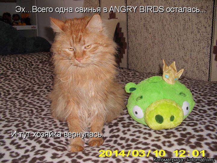 Котоматрица: Эх...Всего одна свинья в ANGRY BIRDS осталась... И тут хозяйка вернулась...