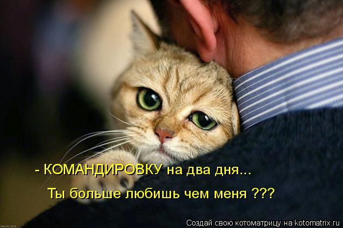 Котоматрица: - КОМАНДИРОВКУ на два дня... Ты больше любишь чем меня ???