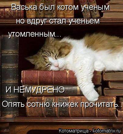 Котоматрица: Васька был котом ученым  но вдруг стал ученьем  утомленным... И НЕМУДРЕНО Опять сотню книжек прочитать...