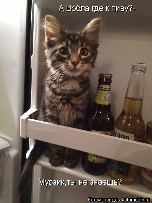 Котоматрица: А Вобла где к пиву?- Мурзик,ты не знаешь?