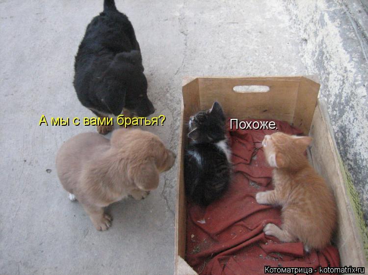 Котоматрица: А мы с вами братья? Похоже.
