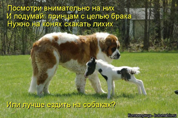 Котоматрица: Посмотри внимательно на них И подумай: принцам с целью брака Нужно на конях скакать лихих Или лучше ездить на собаках?