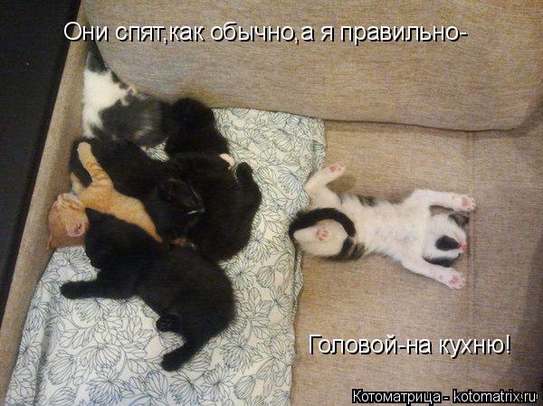 Котоматрица: Они спят,как обычно,а я правильно- Головой-на кухню!