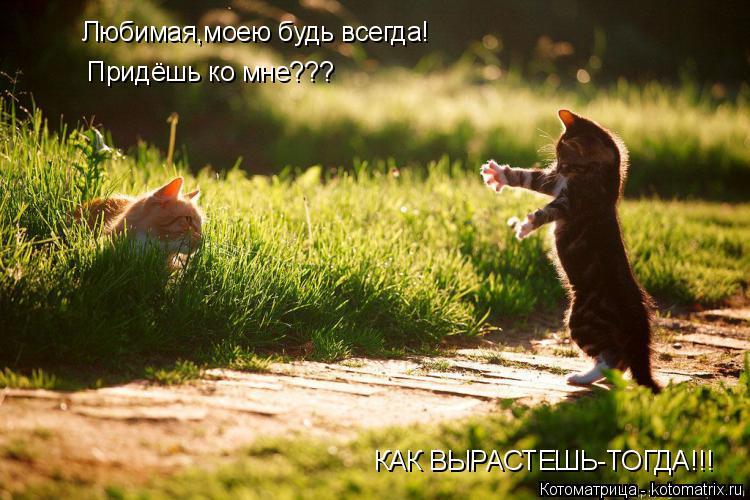 Котоматрица: Любимая,моею будь всегда!  Придёшь ко мне??? КАК ВЫРАСТЕШЬ-ТОГДА!!!