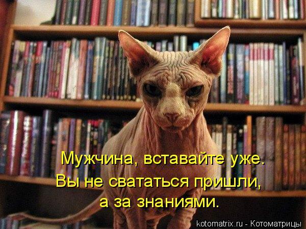 Котоматрица: Мужчина, вставайте уже. Вы не свататься пришли,  а за знаниями.